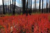 Fireweed, Iron Gate - Sunny Pass Trail  (HshoeBsn091610-056adj.jpg)*