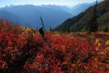Along The Flora Lake Trail:  Chilliwack River, British Columbia  (FloraLkBC100110-146adj.jpg)