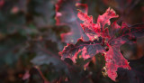 Fall Color, Northern Michigan (ThomasRock_101012_008-2.jpg)