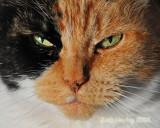 Callie looking disturbed