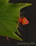New Cactus Bud