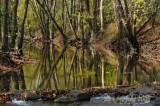 Loramie Creek at Lockington