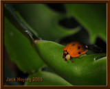 First Ladybug of the Year