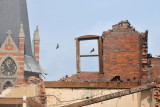 Bats looking for a new home after the last of the 1885 school is torn down