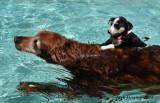 Stukie & Sparkie Swimming