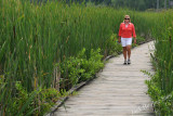 The boardwalk through the cattail