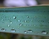 Rain on the Yucca