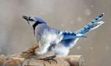 Windy day at the bird feeder