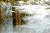 Tree reflection in slushy pool of water