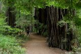 Jedediah Smith Redwoods State Park, Crescent City