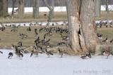 Winter Gathering on Lake Loramie