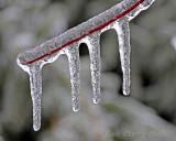Ice on thin red stem