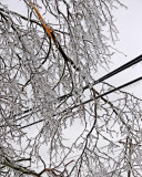 Branch on Utility Lines