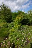 Scampston Gardens002.JPG