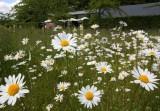 Scampston Gardens010.JPG