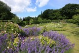 Scampston gardens