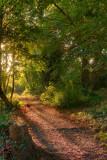 Dene Wood3 IMG_2775.jpg