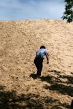 Climbing Indiana Dunes