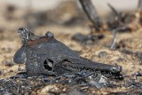 Texas prairie drought and fire devastating effect on wildlife.