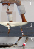 Least Tern Bands UTC Summer 2009 - Request for help to identify  bands