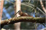 ecureuil -  squirrel 1.jpg