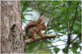 ecureuil -  squirrel 3.jpg