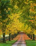 Beech tree avenue 2 of 3