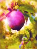 juicy plum watercolor