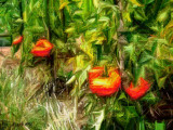 tomato abstract
