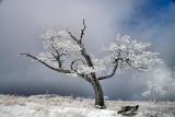On White Top Mountain VA.