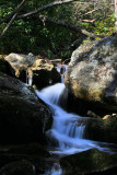 Tom Creek   1/1/09