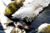 On Twin Creek TN