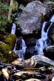 Bottom of The Cascades/Falls,  Sum New Pictures Of Little Bullhead Cr