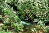 No Name Creek