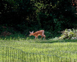My Deer Gallery