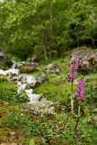 natural_park_of_ponga