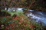 muniellos_forest