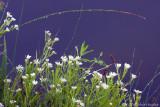 Wet Wild Flowers