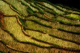Rice paddy field lines