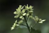 Green - Wild Flowers