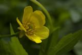 Yellow  - Wild Flowers