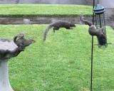 Squirrel leap.jpg