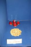 22-04-09 MB0 Nederlandeers kampioenendag 162.JPG