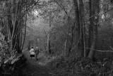 Forest Path Haiku #4