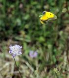 Butterfly Haiku #5