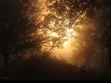 Misty Morning Haiku #11