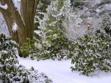 Clark Botanic Garden