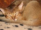 Tired little Finn