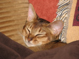 Finn cuddled under the electric blanket, snoozing