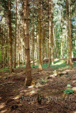 Tannenwald (84097)